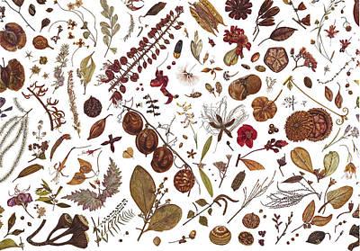 Herbarium Specimen Poster by Rachel Pedder-Smith