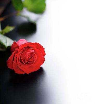 Red Rose Poster by Jelena Jovanovic