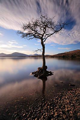 Loch Lomond Tree Poster by Grant Glendinning