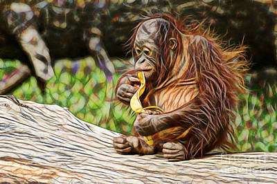 Orangutan Collection Poster by Marvin Blaine