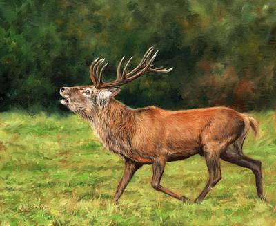 Red Deer Stag Poster by David Stribbling