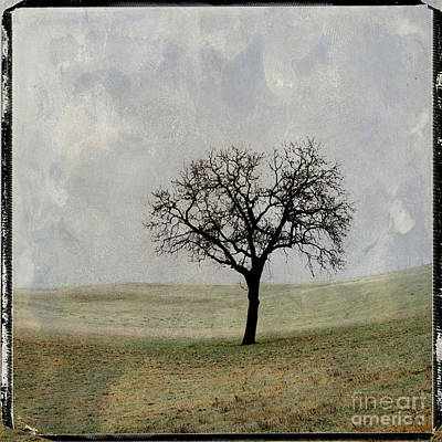 Textured Tree Poster by Bernard Jaubert