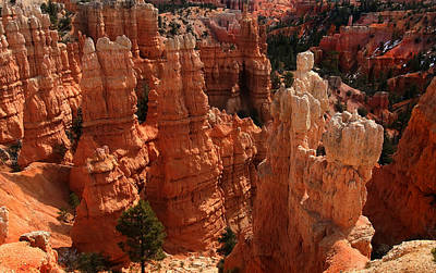 Bryce Canyon National Park Poster by Mark Smith