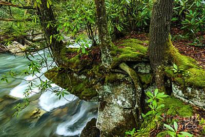 Back Fork Of Elk River Poster by Thomas R Fletcher