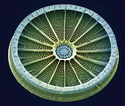 Diatom, Sem Poster by Steve Gschmeissner