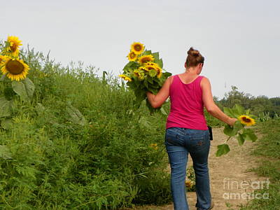 #933 D961 Nature's Return Colby Farm Sunflowers.jpg Poster by Robin Lee Mccarthy Photography
