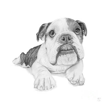 A Bulldog Puppy Poster by Stacey May