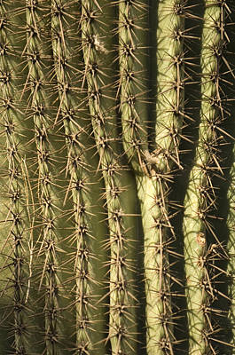A Cactus From The Omaha Zoos Desert Poster by Joel Sartore