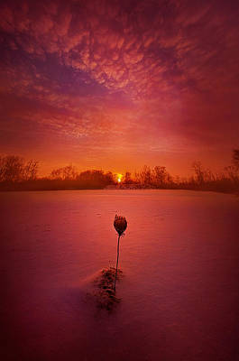 A Chance Meeting Poster by Phil Koch