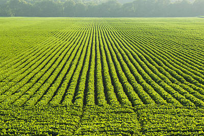 A Large Field Of Green Soybeans Poster by Scott Sinklier