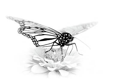 A Light Touch - Butterfly Poster by Nikolyn McDonald