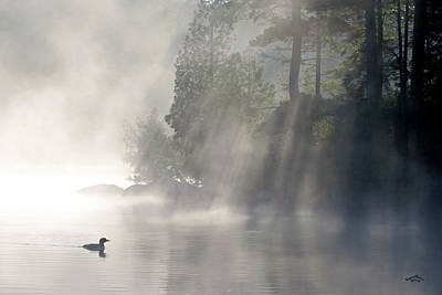 A Loon In The Mist Poster by Brian Pelkey
