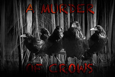 A Murder Of Crows Poster by Randall Nyhof