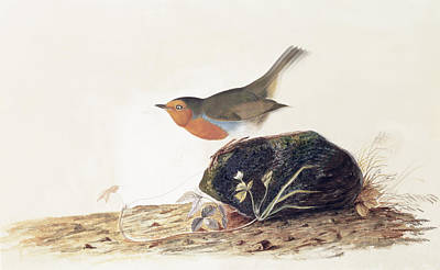 A Robin Perched On A Mossy Stone Poster by John James Audubon