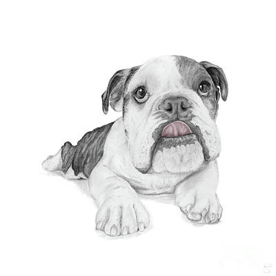 A Sassy Bulldog Puppy Poster by Stacey May