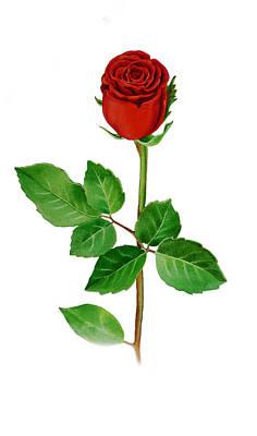 A Single Rose Poster by Irina Sztukowski