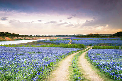 A Trail In The Middle Of Bluebonnet Field - Texas Wildflower Poster by Ellie Teramoto