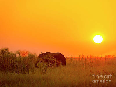 Africa Background Poster by Tim Hester