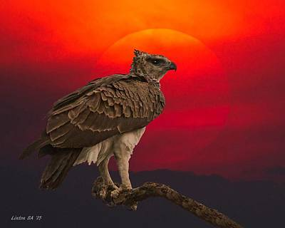 African Eagle At Sunset Poster by Larry Linton