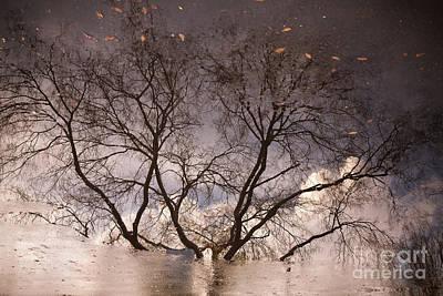 Afternoon Reflection Poster by Derek Selander