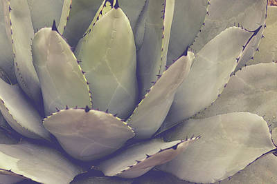 Agave Poster by Joy StClaire