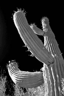 Ain't No Saguaro In Texas Poster by Christine Till