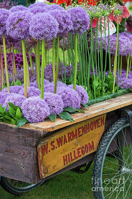 Allium Cart Poster by Tim Gainey