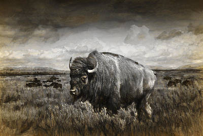 American Buffalo In The Grand Tetons Poster by Randall Nyhof