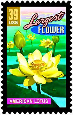 American Lotus Poster by Lanjee Chee