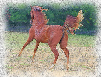 American Saddlebred Filly Poster by EricaMaxine  Price
