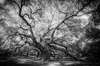 Angel Oak Poster by Rob Travis