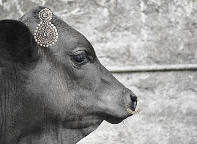 Animal Royalty 11 Poster by Sumit Mehndiratta