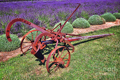 Antique Plow And Lavender Poster by Olivier Le Queinec