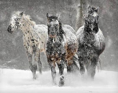 Appaloosa Winter Poster by Wade Aiken
