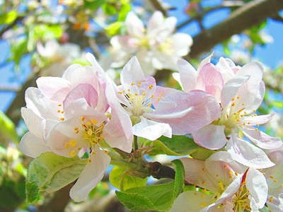 Apple Blossoms Art Prints Spring Trees Baslee Troutman Poster by Baslee Troutman