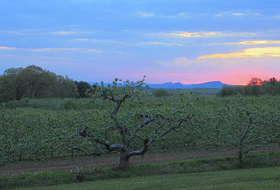 Apple Orchard And Holyoke Range At Sunset Poster by John Burk