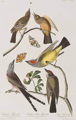 Arkansaw Flycatcher Swallow-tailed Flycatcher Says Flycatcher Poster by John James Audubon