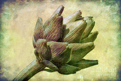 Artichoke Poster by Susan Isakson