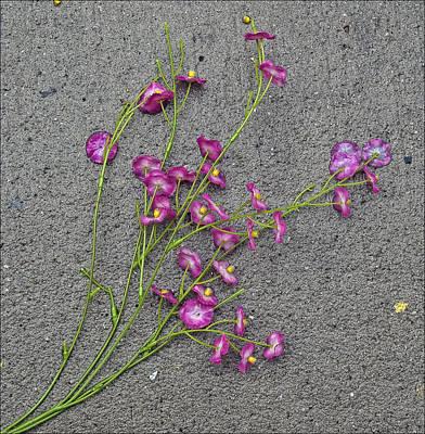 Artificial Flowers After A Storm 2 Poster by Robert Ullmann