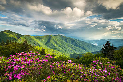 Asheville Nc Blue Ridge Parkway Spring Flowers Poster by Dave Allen