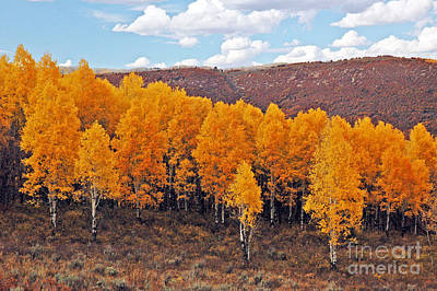 Aspens In Autumn Poster by George E Richards