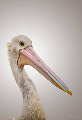 Australian Pelican Poster by Wim Lanclus