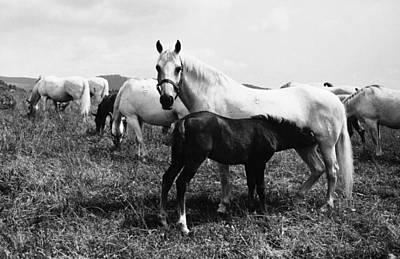 Austria: Horse Farm Poster by Granger