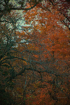 Autumn 2015 Orange Trees Pa 01 Vertical Poster by Thomas Woolworth