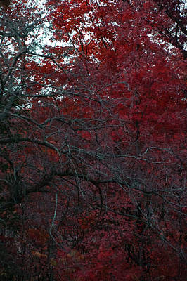 Autumn 2015 Red Trees Pa 02 Vertical Poster by Thomas Woolworth