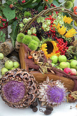 Autumn Abundance Poster by Tim Gainey