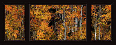 Autumn Brilliance Triptych Poster by Leland D Howard