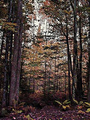 Autumn Color In The Woods Poster by Joy Nichols