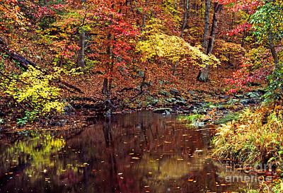 Autumn Color South Branch Quantico Creek Poster by Thomas R Fletcher