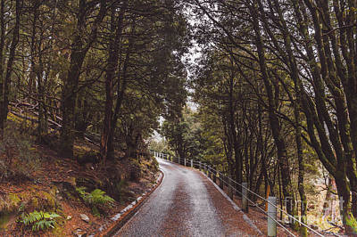 Autumn Drive On Pristine Cradle Mountain Road Poster by Jorgo Photography - Wall Art Gallery